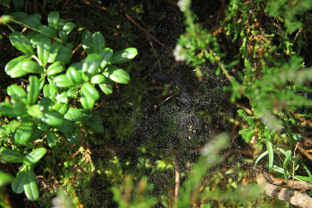 ämbliku võrk
