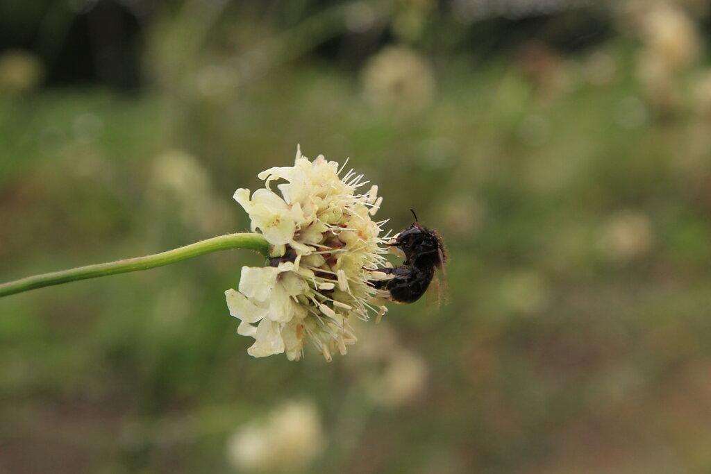 Mesilane