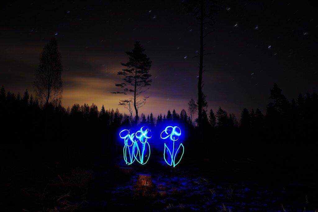 Öösel metsas