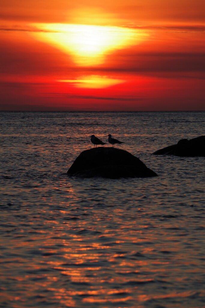 Linnud ja loojang