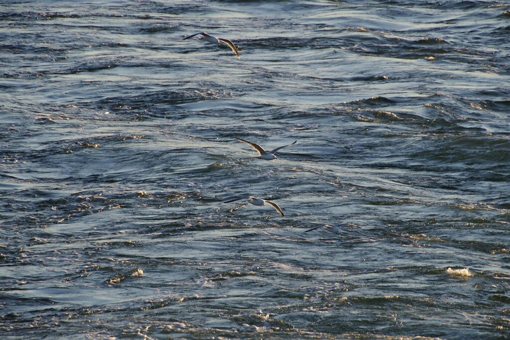 Kajakad kiiluvees
