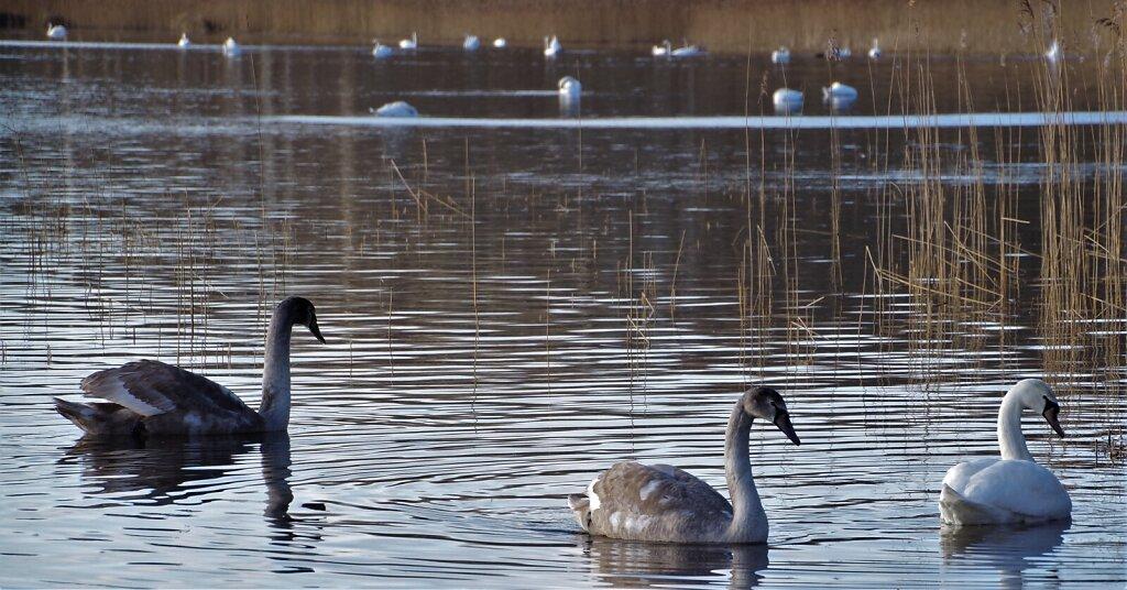 Kolm luike Klooga järvel