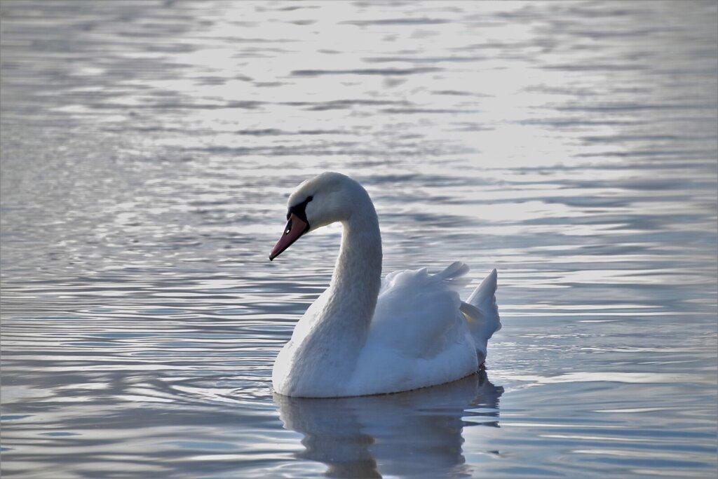 Luik ujumas