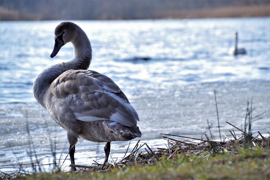 Luik Klooga järve kaldal