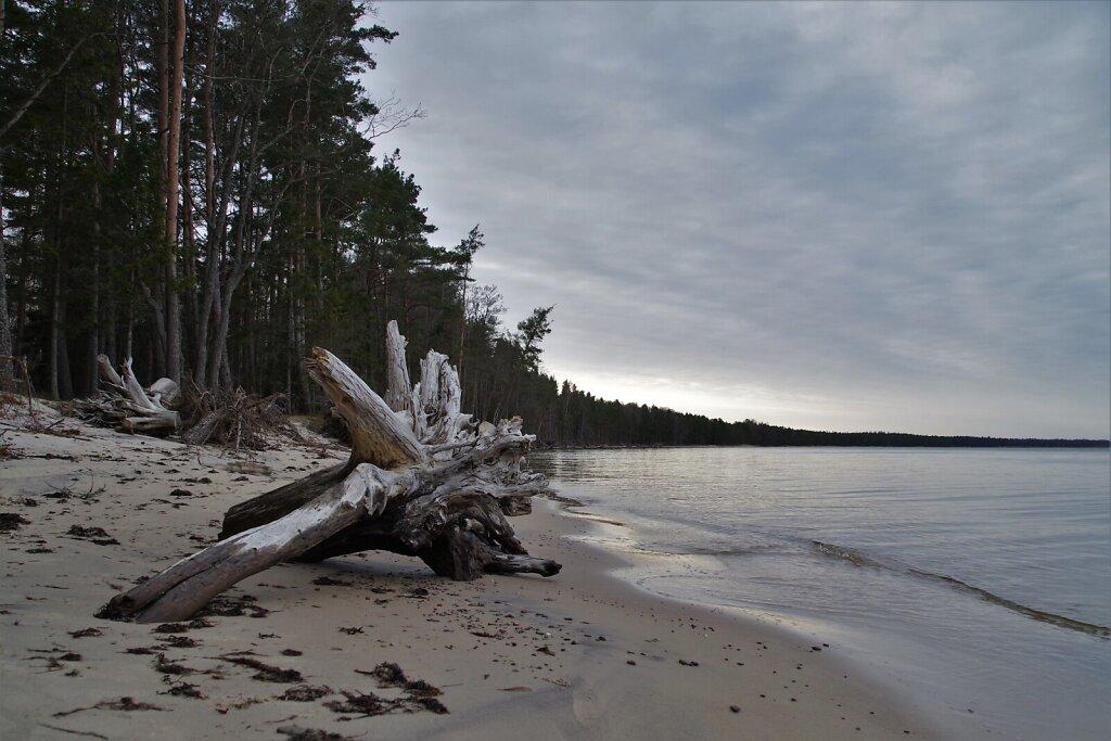 Tõrvanina rand